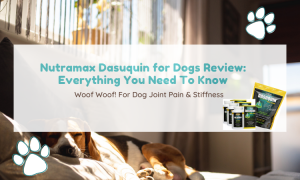 dasuquin review