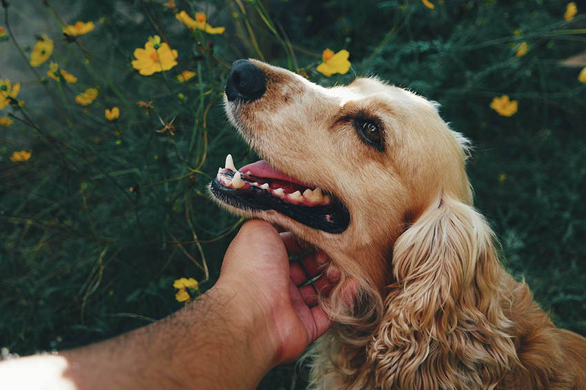 our top pick - the best dog shampoo for itchy skin