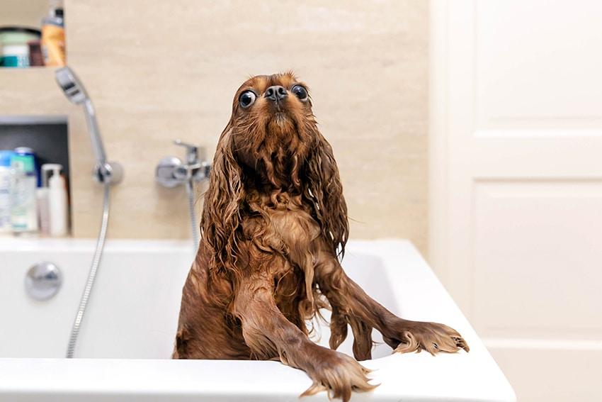 our verdict on organic dog shampoos