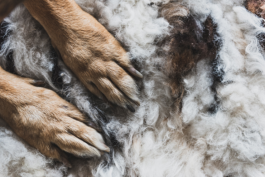 dog paw protection in winter