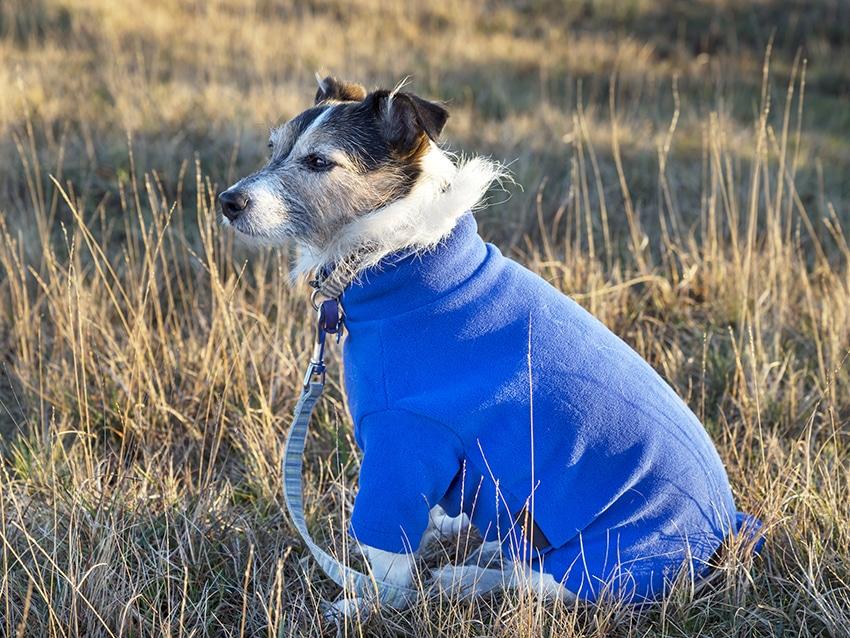 dog wearing a warm sweater