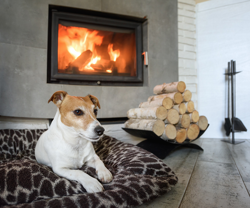 protect your dog from heaters