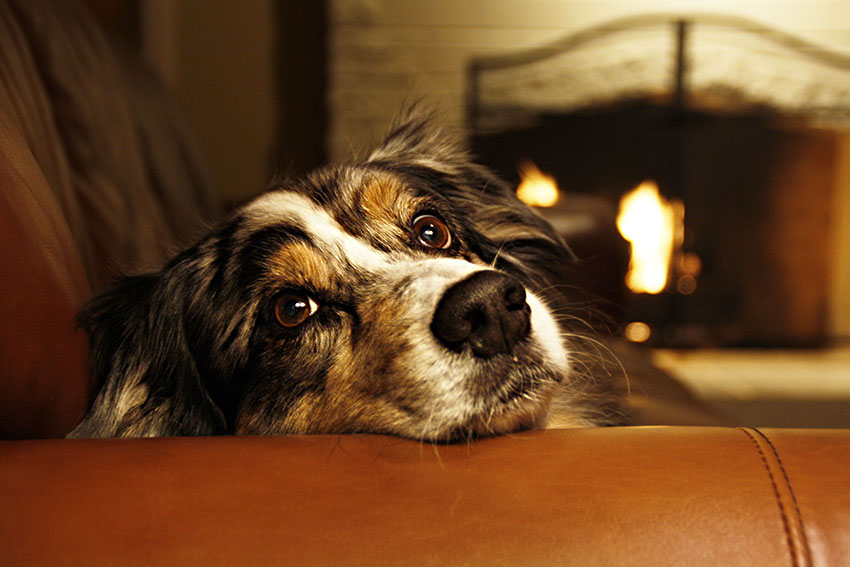 provide warm bedding for your dog