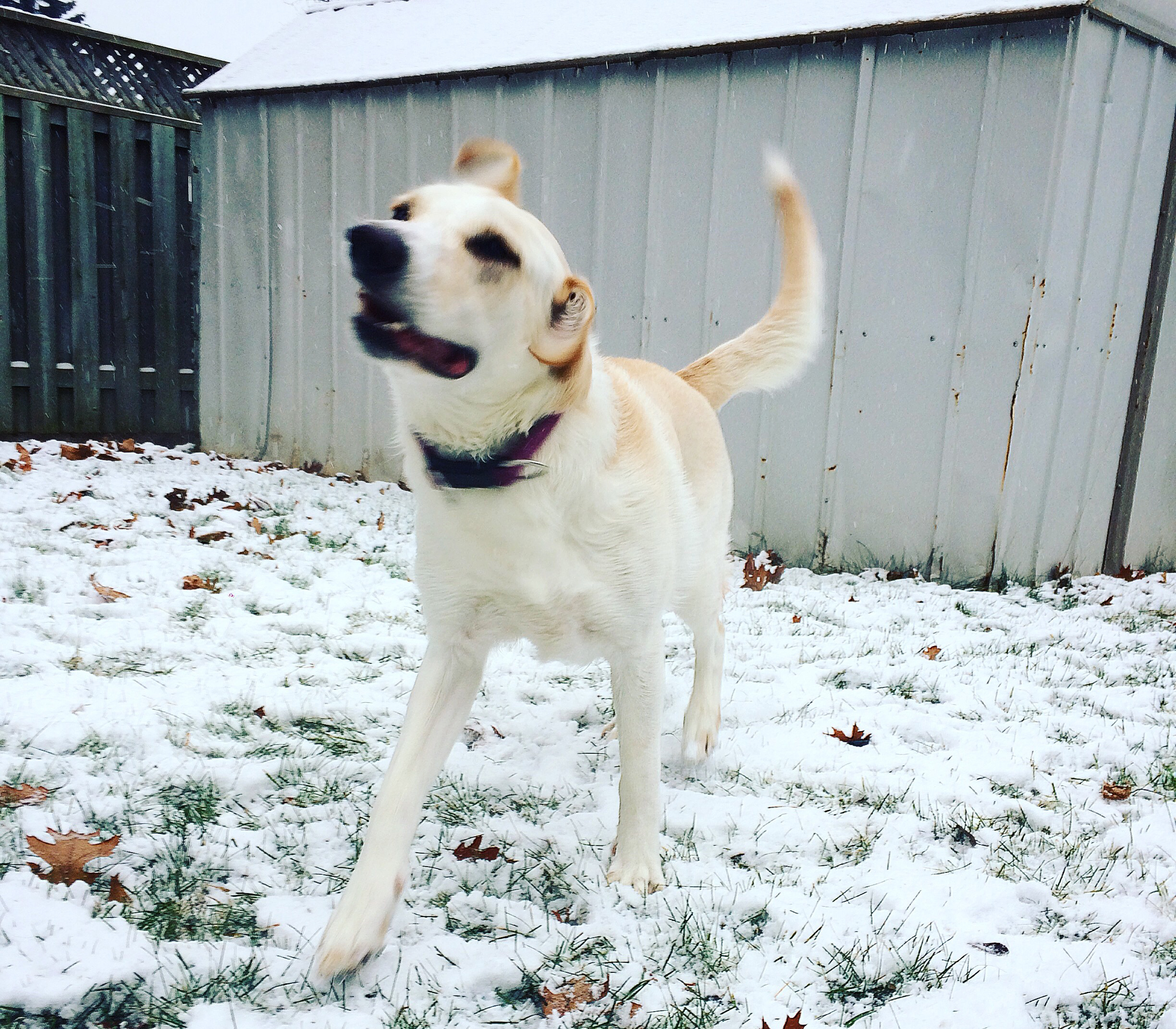 snow maintenance for dog safety