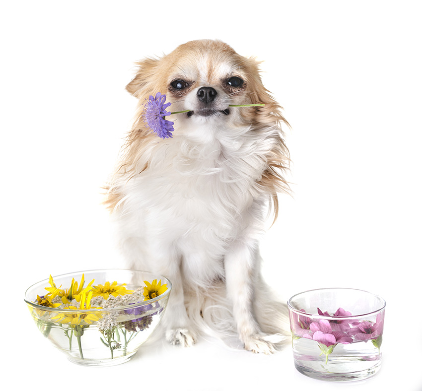 Soothe Your Dog's Anxiety
