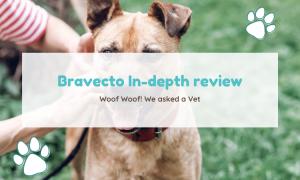 bravecto review