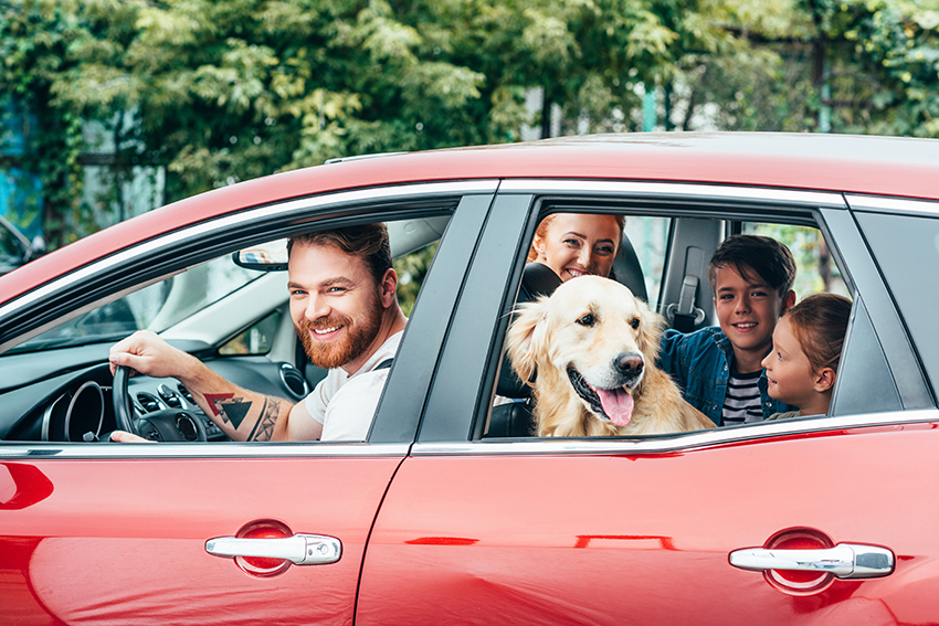 dogs in the car with family