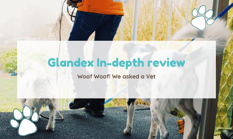 glandex review