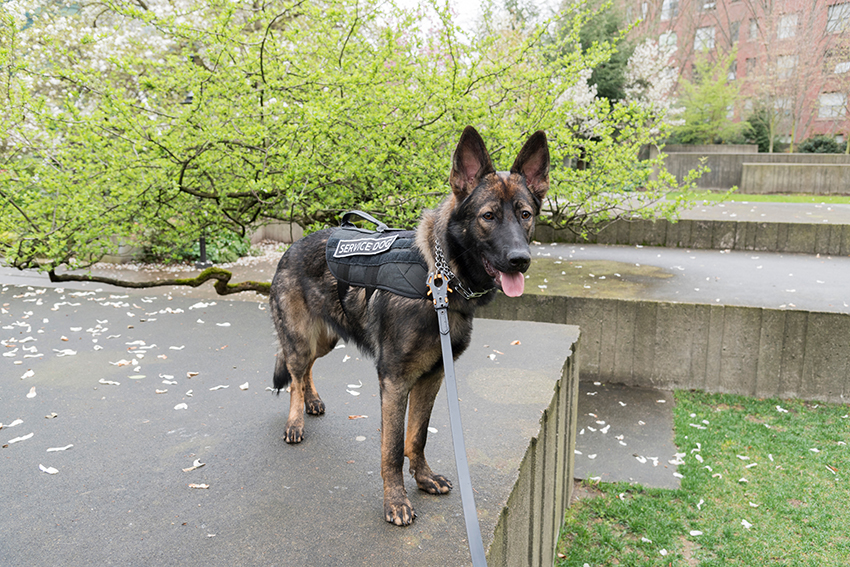 k9 police dog states driving laws