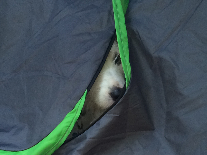 know your dogs favorite hiding places