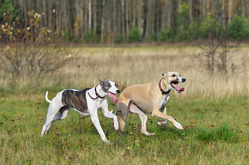 learn your dogs body language
