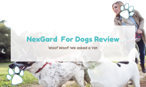nexgard for dogs review