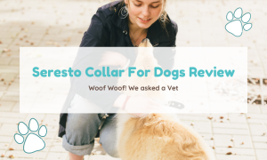 seresto collar for dogs review