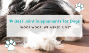 best dog joint supplement