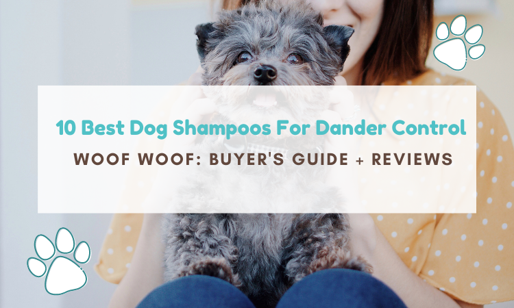 best dog shampoo for dander