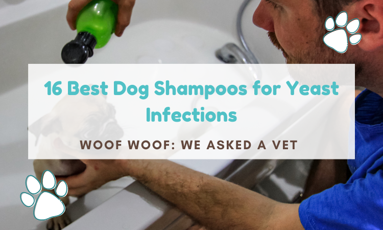 best dog shampoo for yeast infection