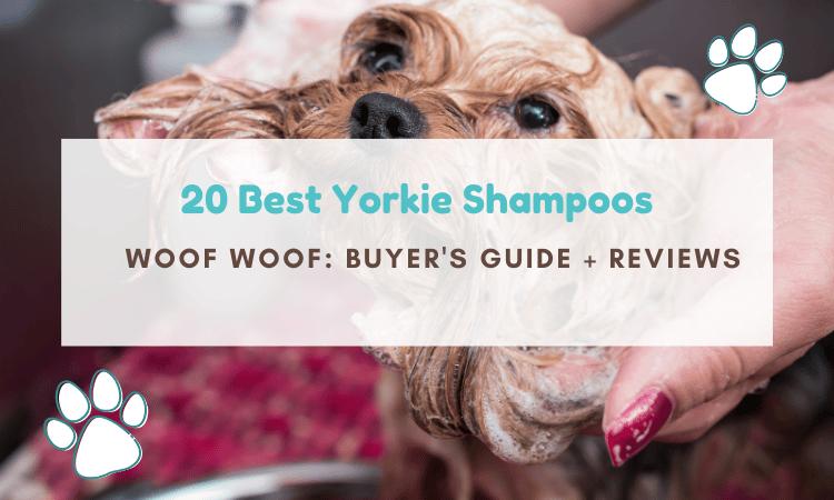 best yorkie shampoo