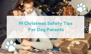 dog Christmas safety tips