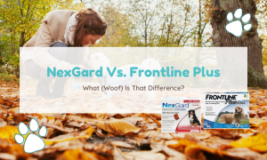 nexgard vs frontline