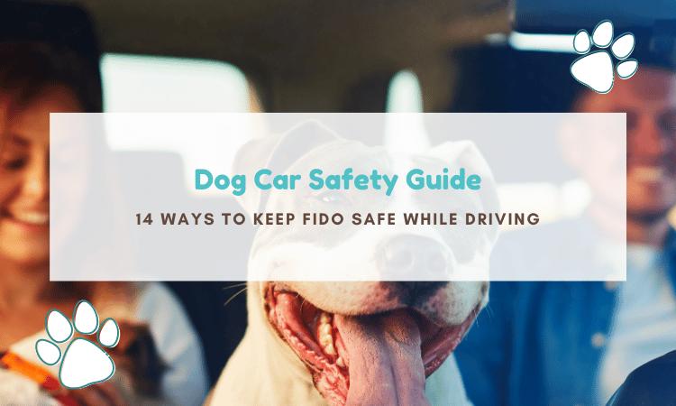 dog car safety