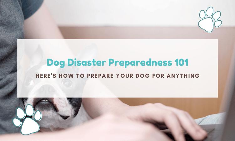 dog disaster preparedness
