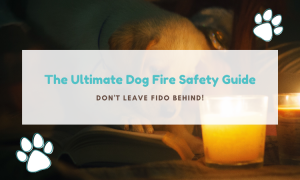 dog fire safety