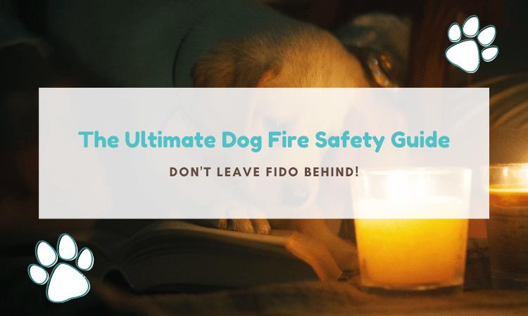 dog fire safety