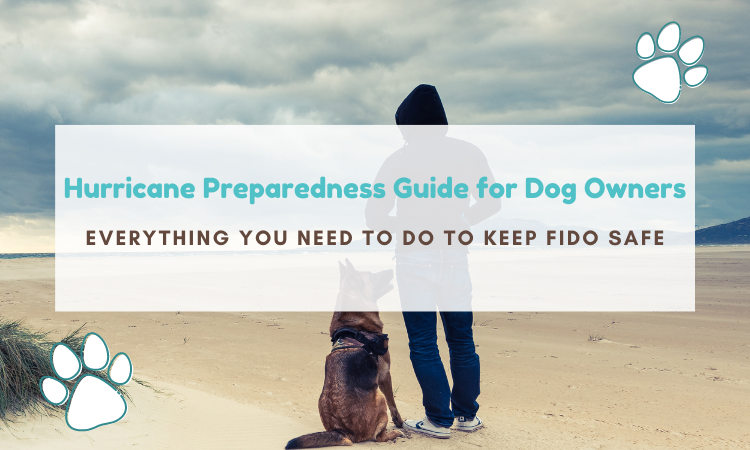 dog hurricane preparedness